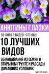 Самшит: описание, виды и сорта, посадка в открытом грунте и уход за кустарником, использование в ландшафтном дизайне (85+ Фото & Видео) +Отзывы
