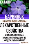 Барвинок: описание основных видов, рекомендации по уходу и размножению, лекарственные свойства (50+ Фото & Видео) +Отзывы