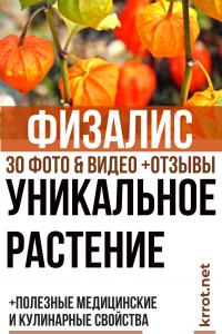 Физалис: описание, выращивание рассады, посадка в открытый грунт и уход за ним, полезные медицинские и кулинарные свойства (30 Фото & Видео) +Отзывы