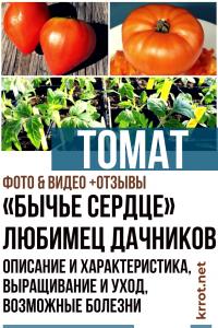 Томат «Бычье сердце» — любимец дачников. Описание и характеристика, выращивание и уход, возможные болезни (Фото & Видео) +Отзывы