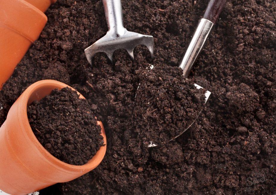 грунт и горшок для растения