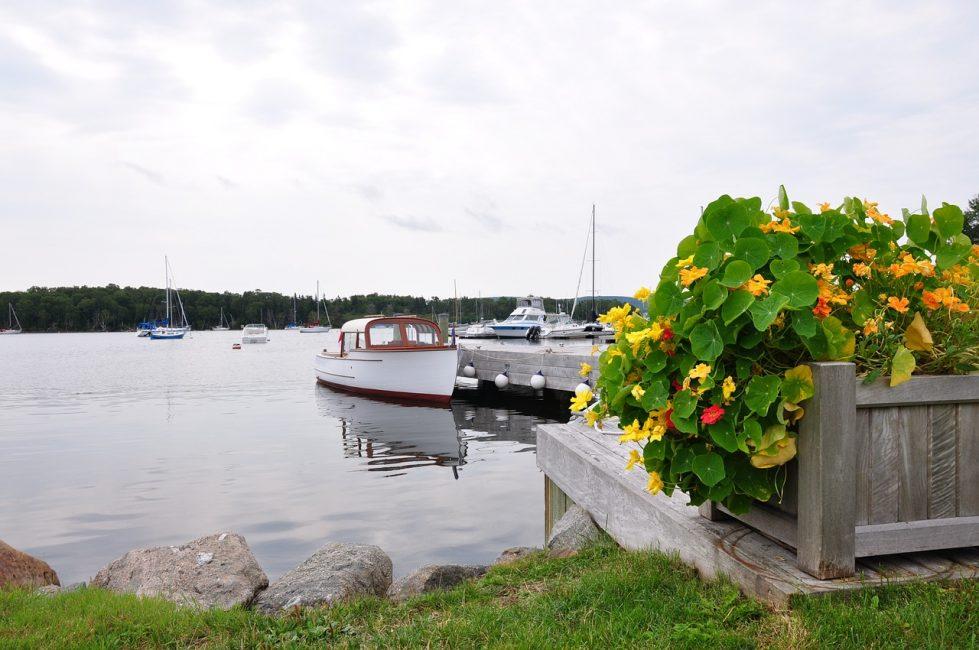 В парках, садах, на побережье растение создает яркие и уютные уголки