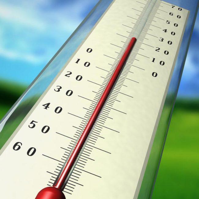 Оптимальная температура воздуха и субстрата в период покоя растения +12-15°С