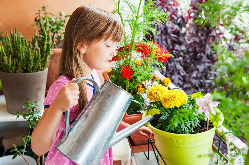 Полив домашнего сада