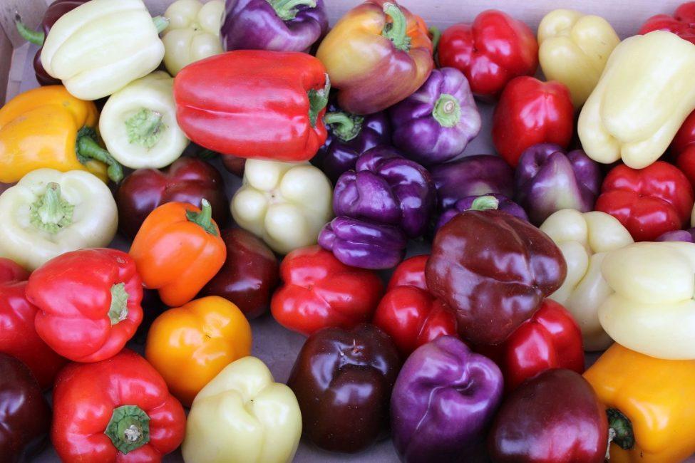 Разнообразие окраса плодов