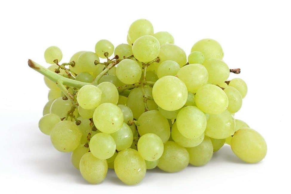 Виноград известен с древности.