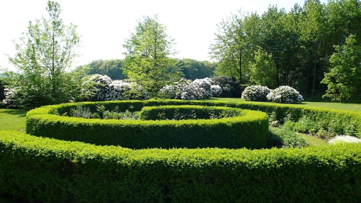 Быстрорастущие растения – это отличный способ в короткие сроки сформировать зеленое заграждение