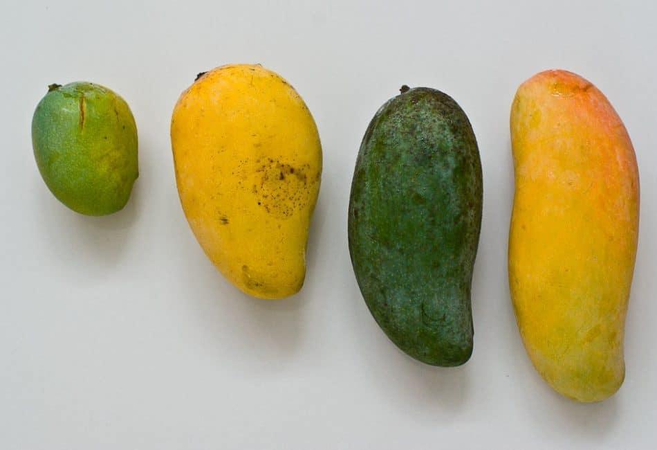 Различные виды фруктов манго