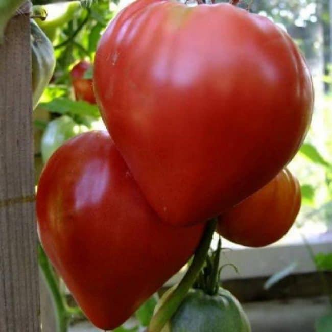 Разновидность «Бычье сердце красное»