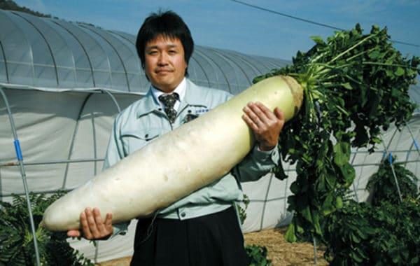 К тому же реклама обещала гигантские корнеплоды из маленького семени и рекордные урожаи