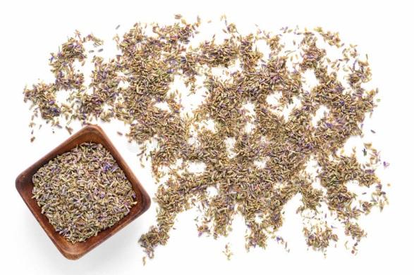 Семена лаванды широколистной