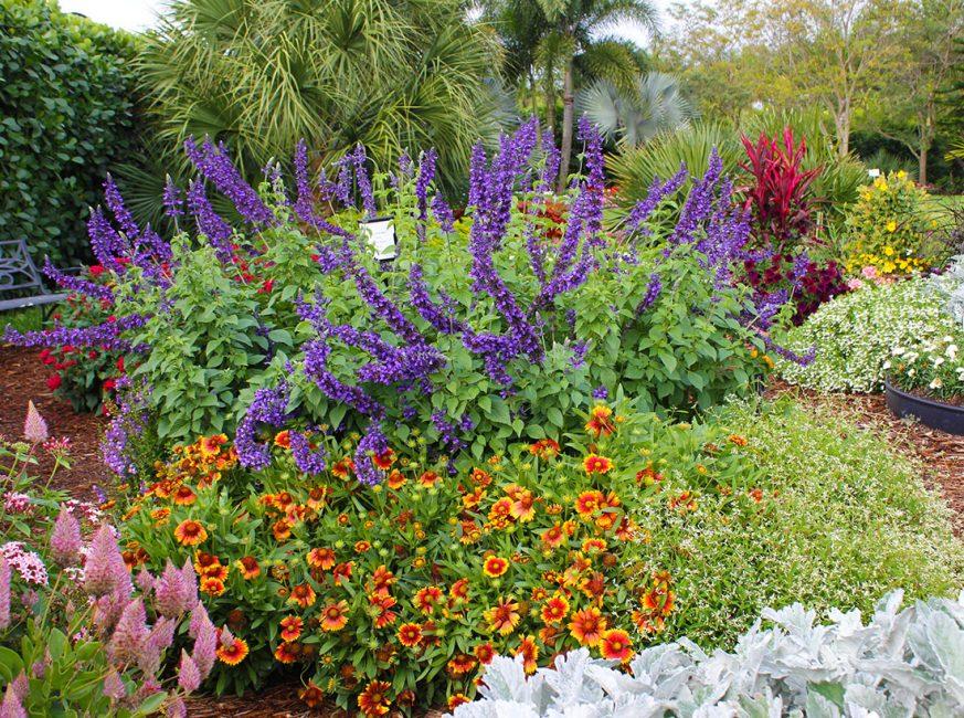Гайлардия в сочетании с листовыми и цветочными декоративными культурами