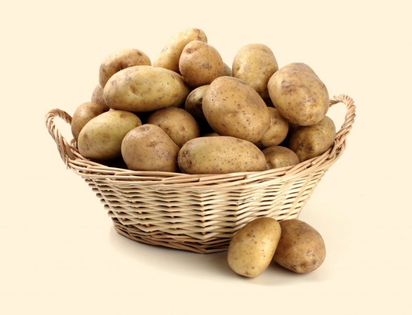 Картофель сорта Ассоль