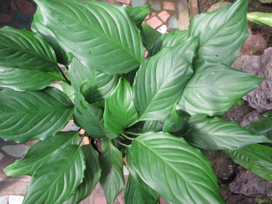 Вид растения при правильном уходе растение