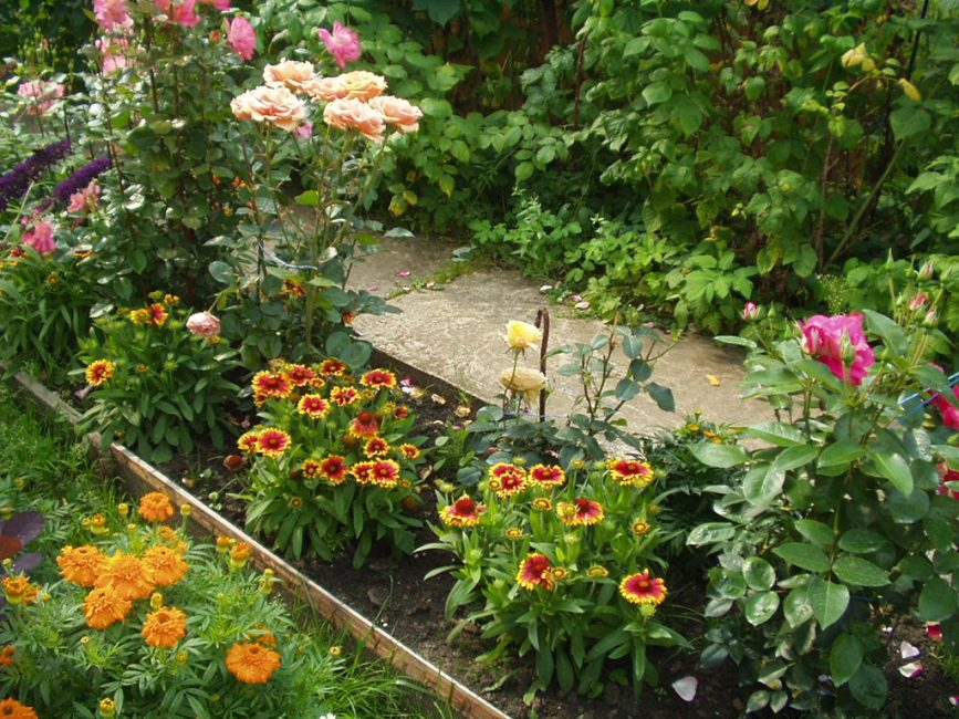 Низкорослые сорта в смешанных цветочных посадках. Gaillardia