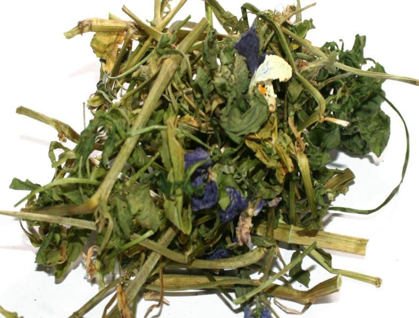 В лекарственных целях используется как корневая, так и наземная часть виолы.