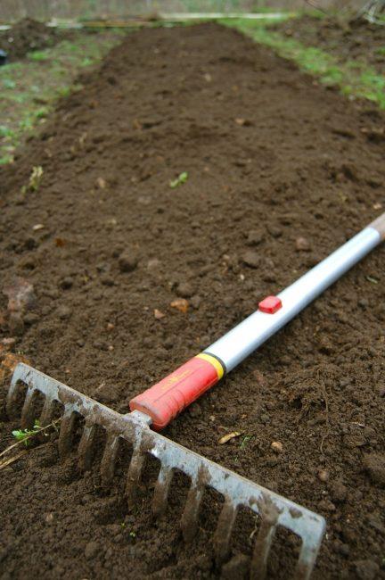 Как и любое растение, прежде чем посадить астры нужно выбрать и подготовить для них комфортное место.