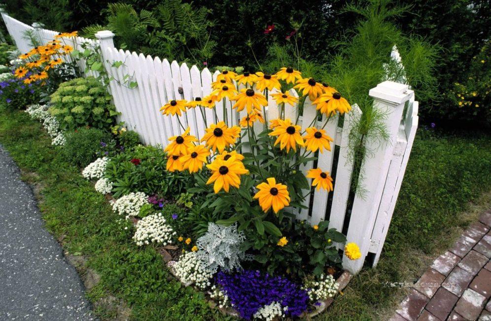 Высокорослые сорта необходимо размещать на заднем плане, чтобы они своим ростом не затмевали остальные растения. рудбекия