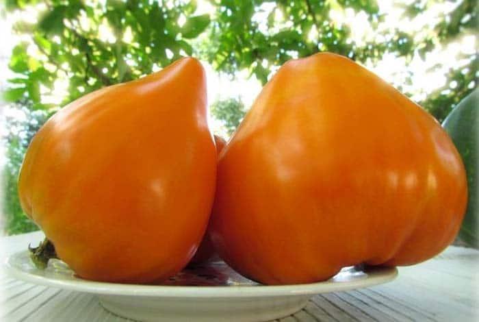 Бычье сердце оранжевое F1