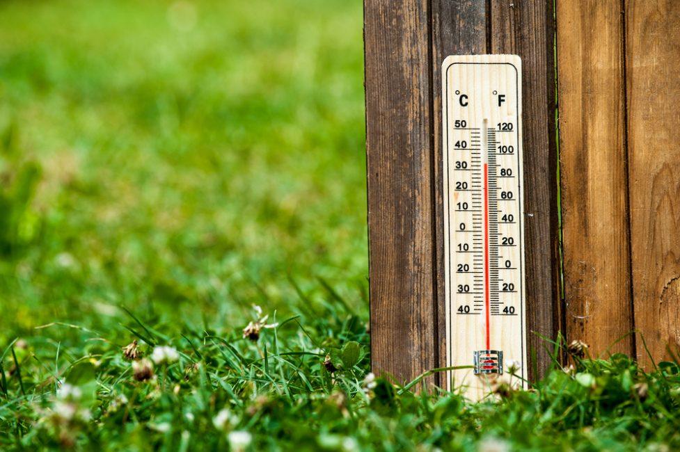 Комфортной для барвинка температура будет +20+24 градуса.