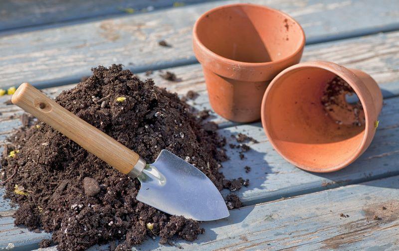 Почва и горшок для манго