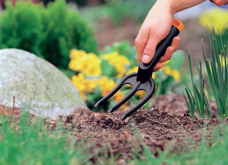 Почву под кустом надо обязательно регулярно прорыхлять!