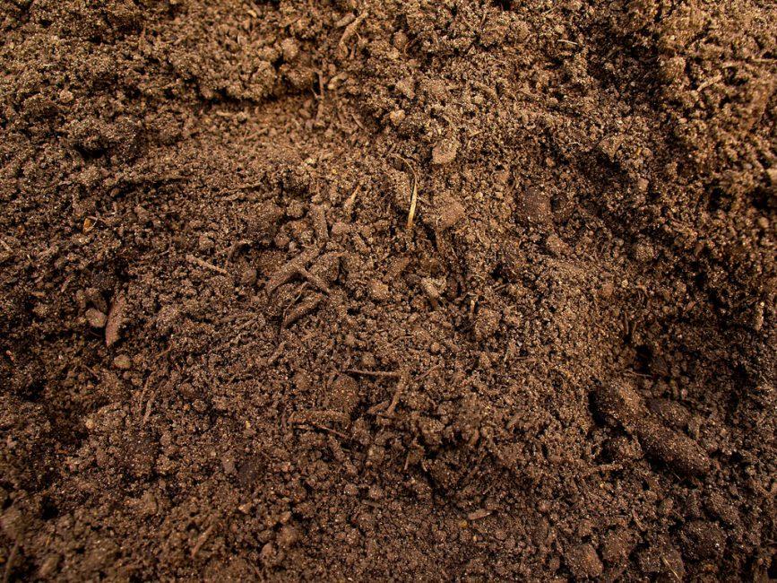 Для посадки яблони состав почвы нужно довести до легкого суглинка