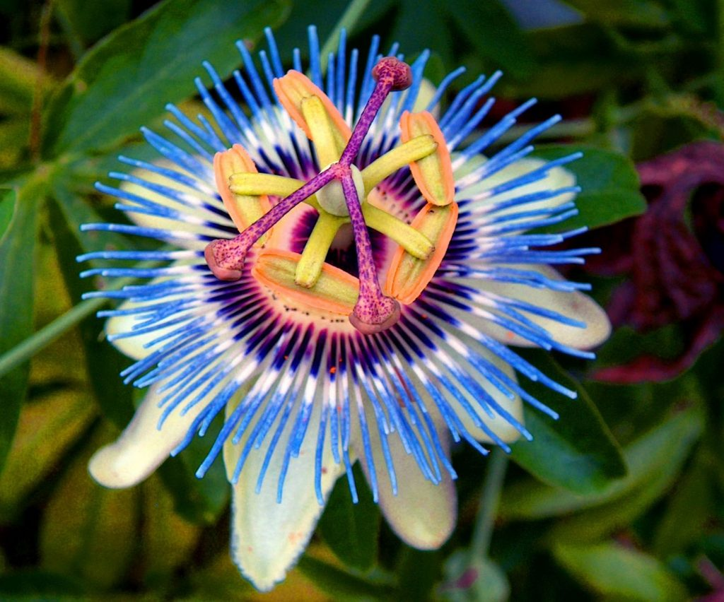 мог подумать, необычные цветы фото и описание большой популярностью она