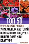 ТОП-50 Декоративных растений очищающих воздух в нашем доме или квартире (50+ Фото & Видео) +Отзывы