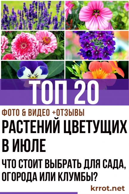 растения цветущие в июле