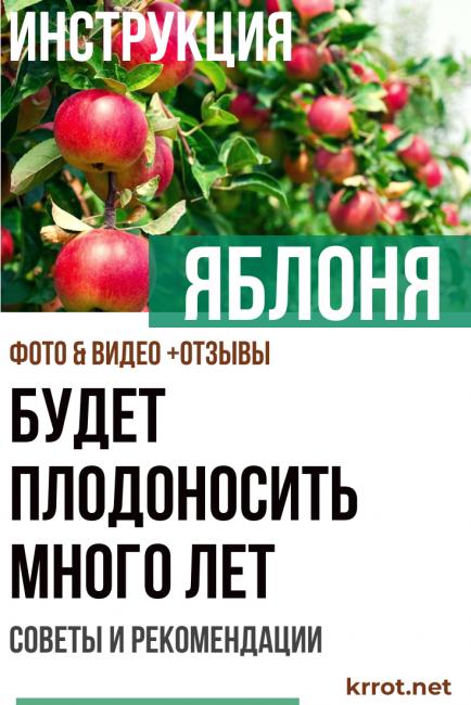 Яблоня - Будет плодоносить много лет