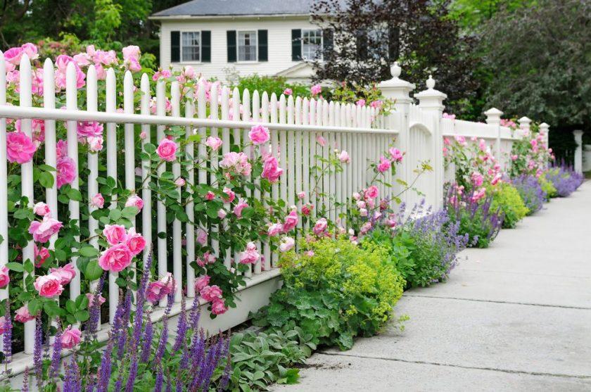 Какой забор между участками поставить, чтобы потом не судиться с соседями