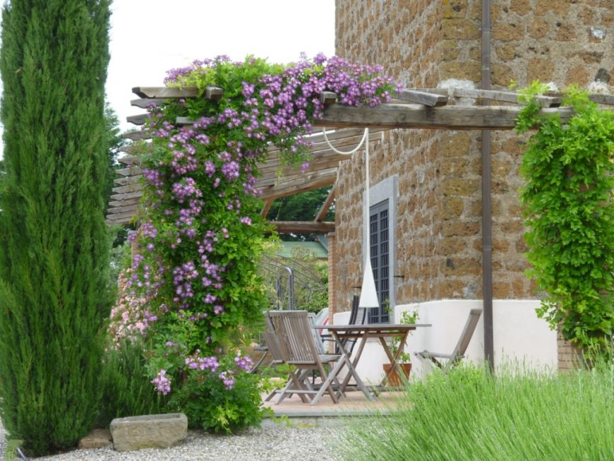 Пергола с клематисом - растением-лианой