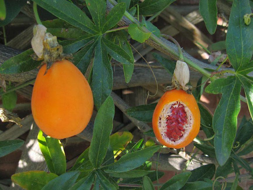 Плоды страстоцвета