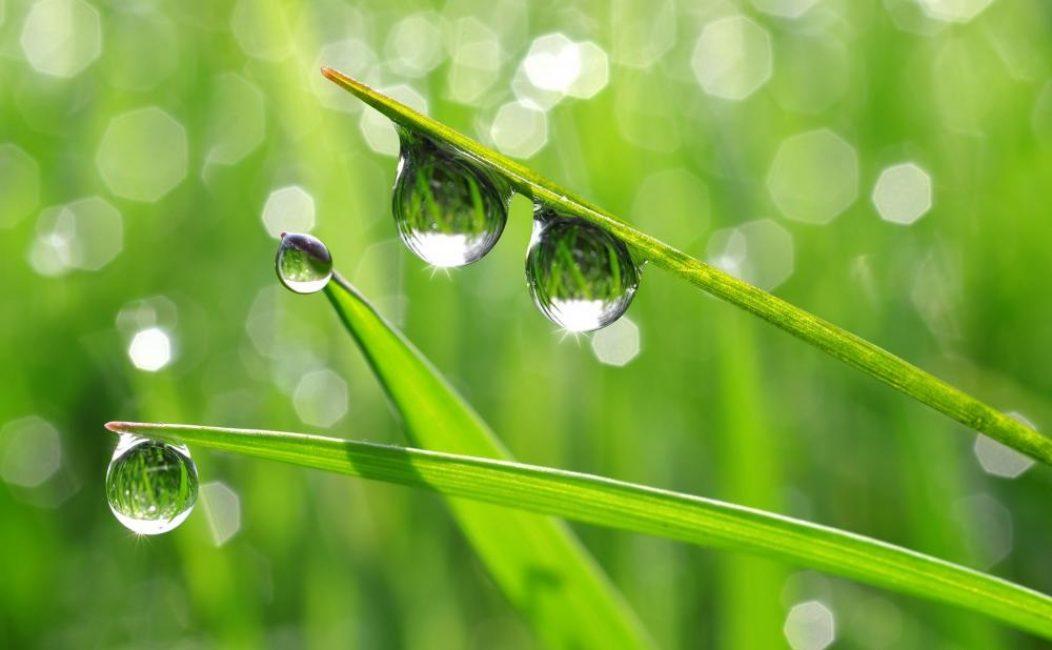 Колеус нуждается в воздухе повышенной влажности