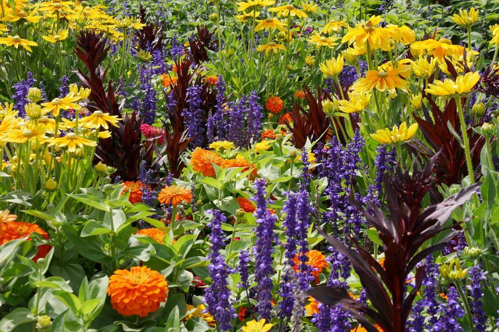 Цветы для сада и огорода и названием
