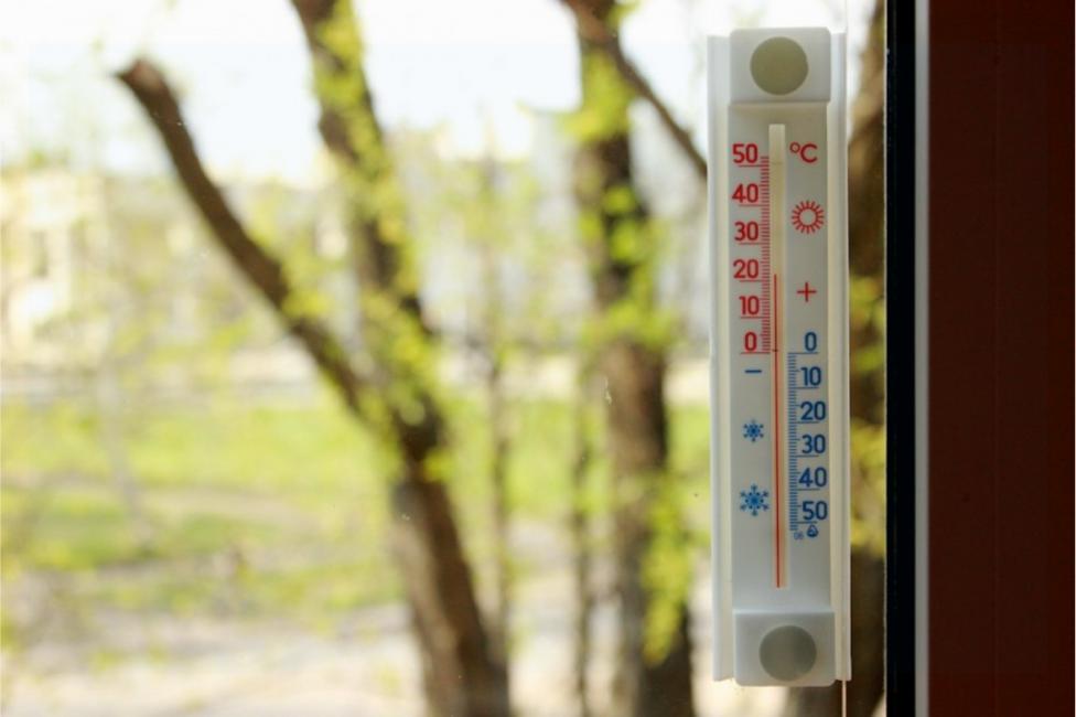 градусник для растений