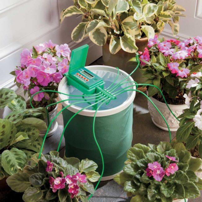 Автоматическая лейка для комнатных растений