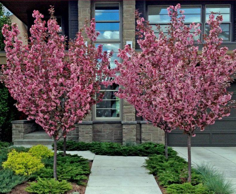 Вариант размещения деревьев