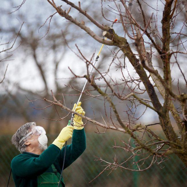 Внимание к дереву – залог высокого урожая в будущем