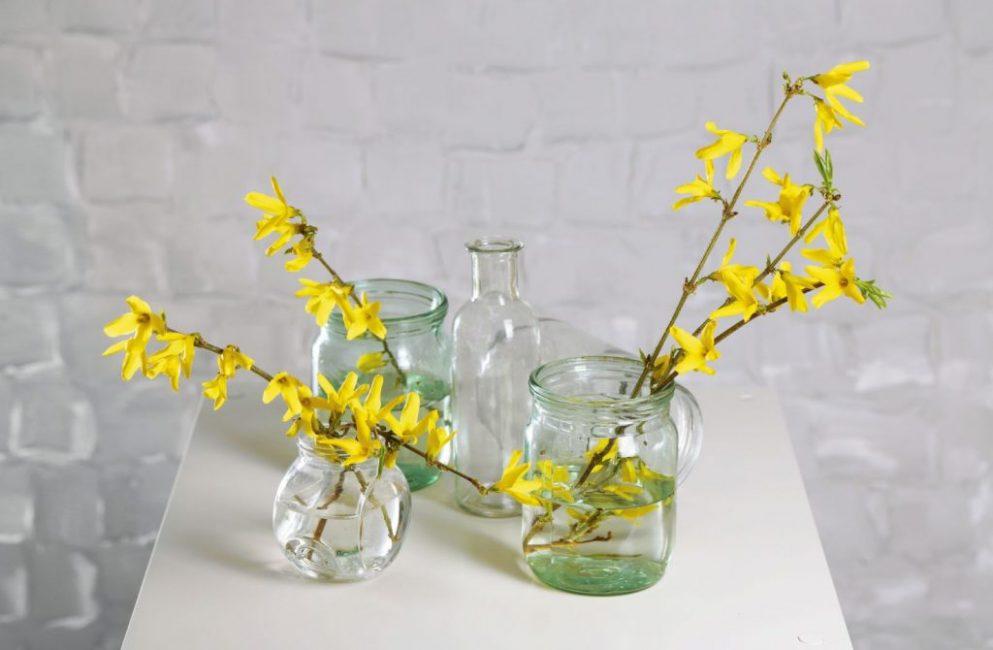 Выгонка растения – это отличный способ получить цветы зимой