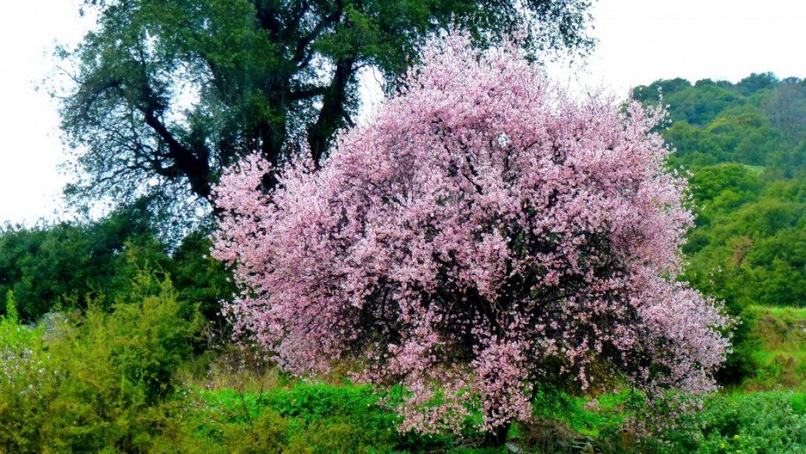 Дерево поражает своей красотой