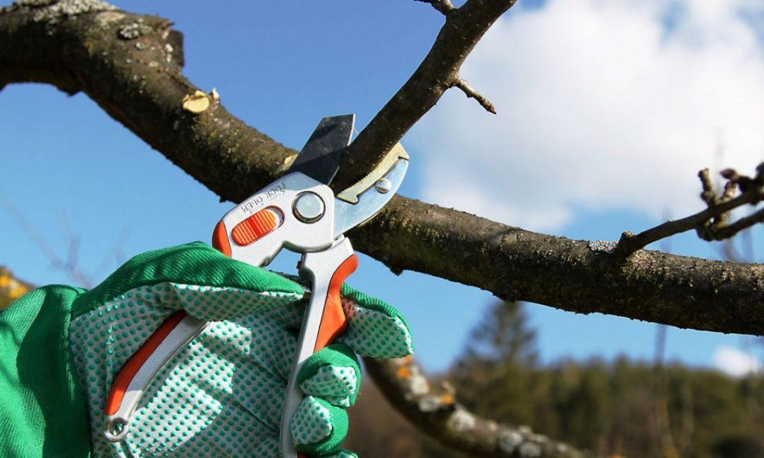 Деревья нужно обрезать регулярно