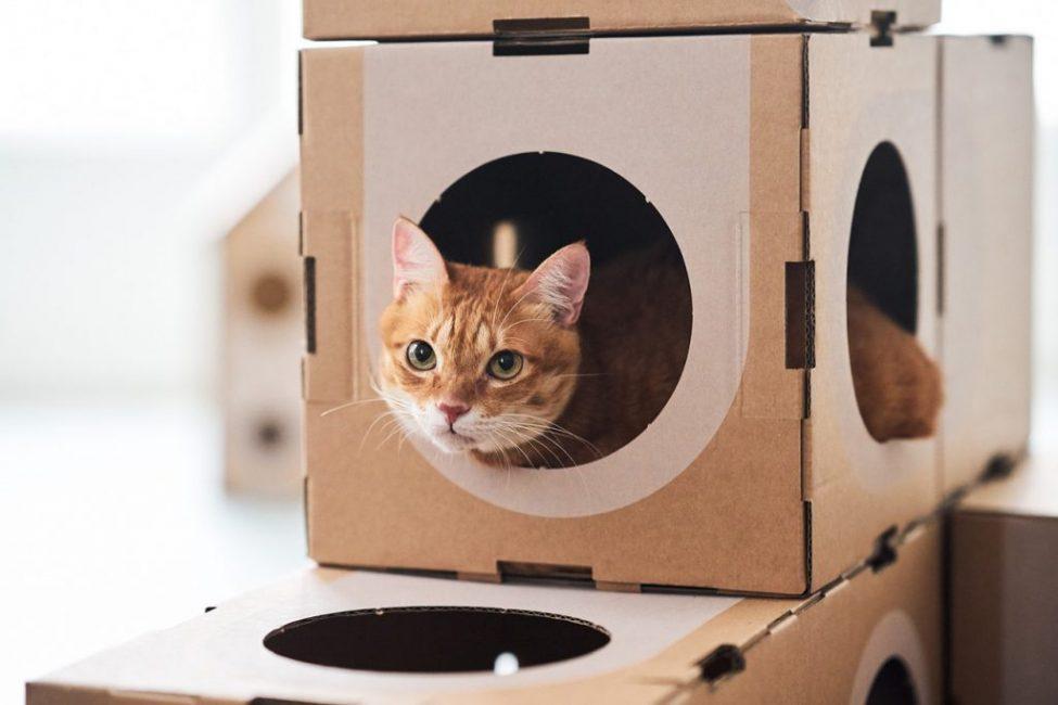 Простое жилище из картона