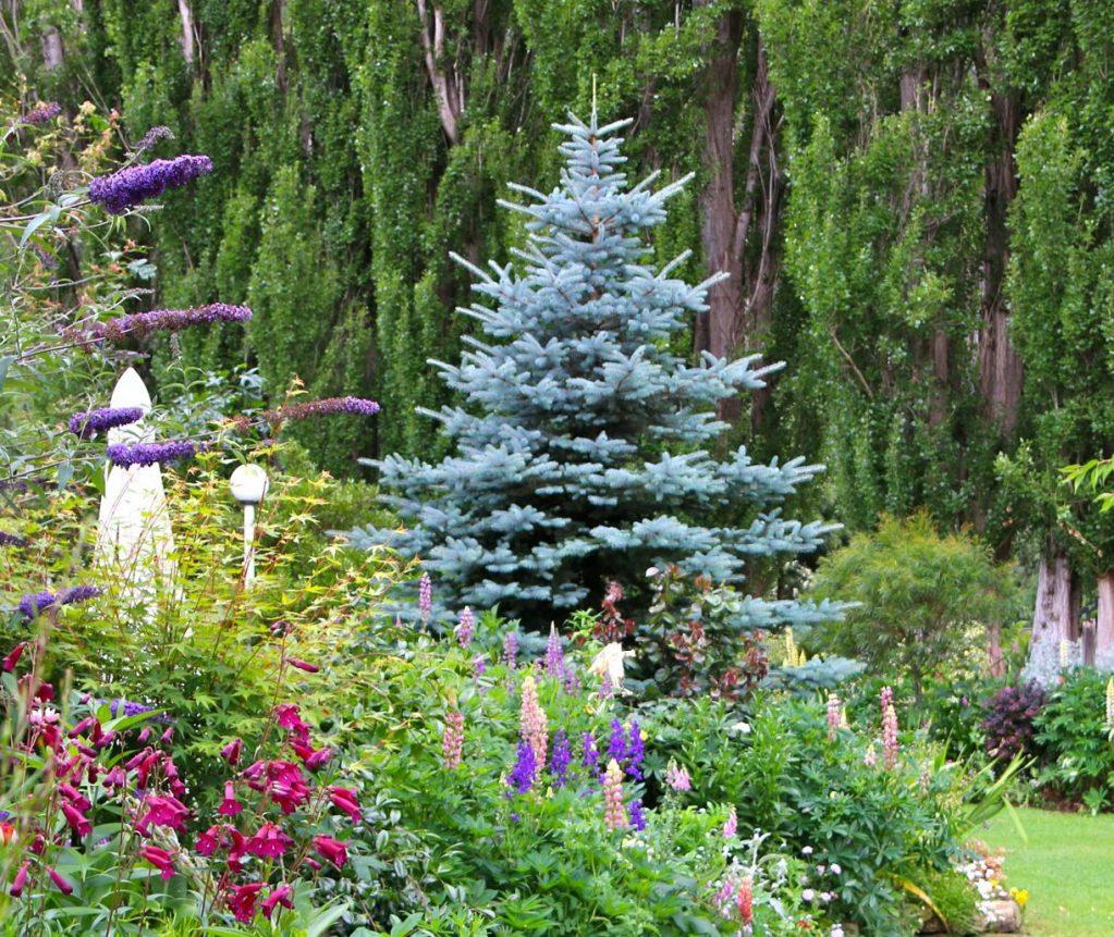 как красиво посадить елки фото заметила другого