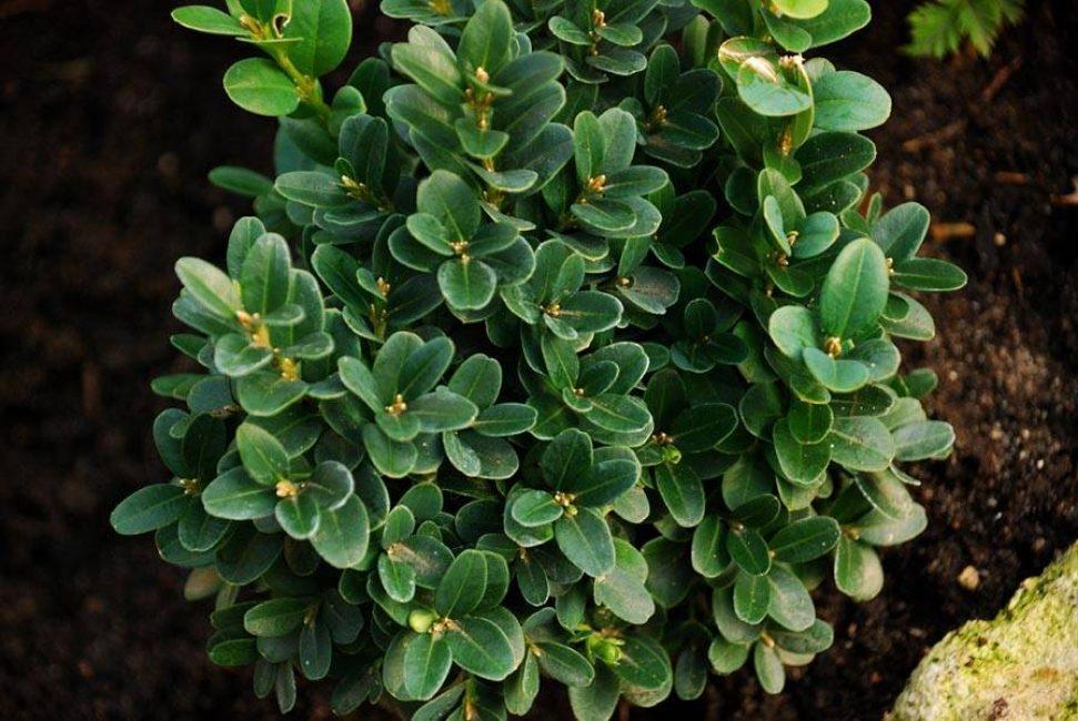 Здоровое растение имеет зелёный насыщенный окрас листьев