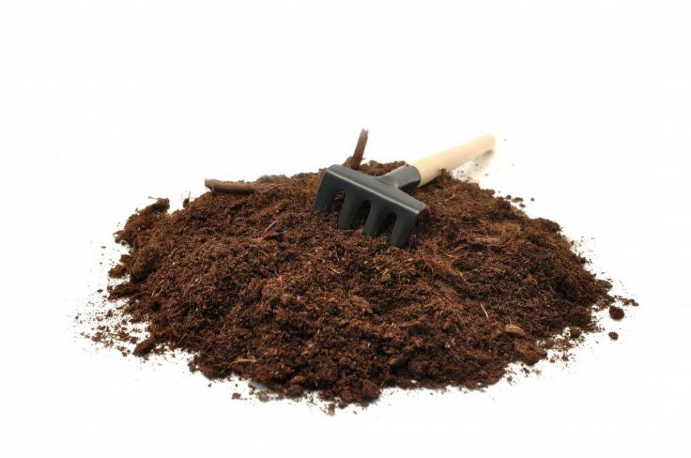 Зимнецвет непритязателен к качеству грунта, но лучше будет расти в нейтральной среде