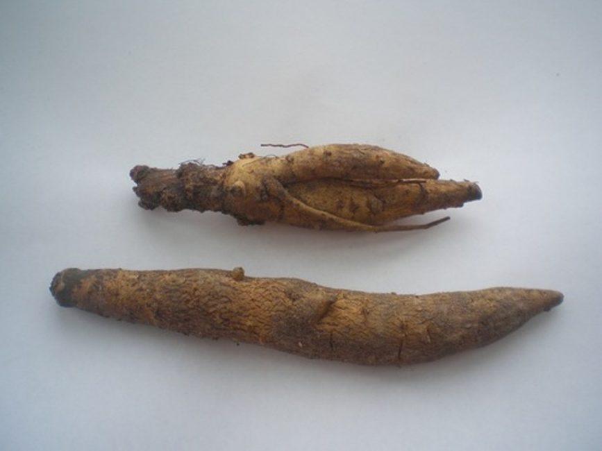 Клубни инкарвиллеи