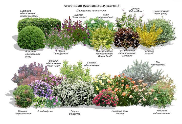 Лучшие садовые культуры для проектирования ландшафта