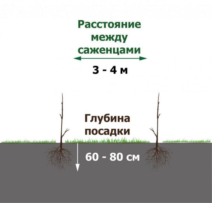 Между растениями должно быть достаточно места